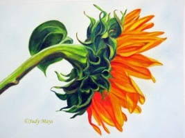 Sunny Side Up $1085 19X22